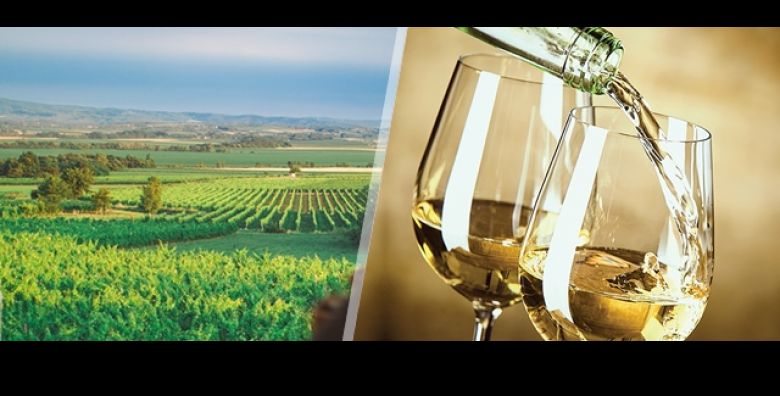 Kontinentalni predah za dusu Akademija grasevine  vinska kuca i pansion u srcu kutjevackog vinogorja Pocastite se s 3 dana 2 nocenja s doruckom za 2 osobe degustacijom vina  samo 399 kn